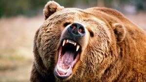 Bear+Attack+Girl+Video+Photo