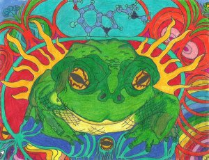 bufo_alvarius_by_revolutionarypeace-d332cr1